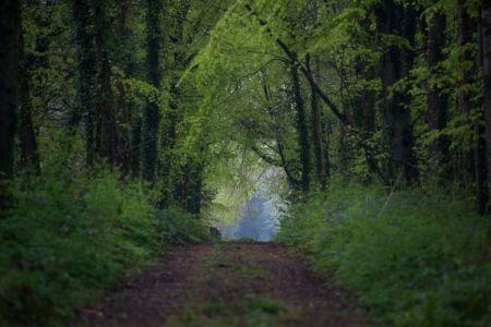 MI Back Road