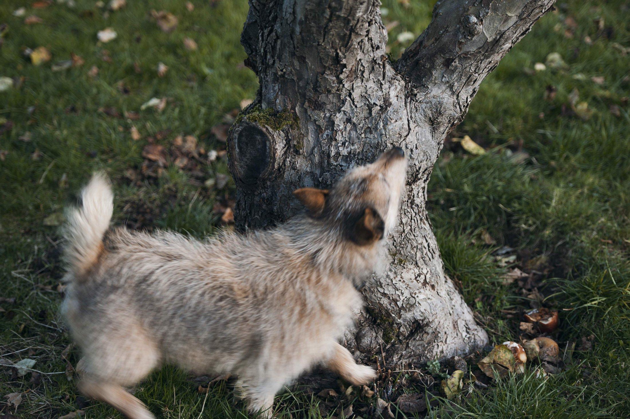 Tree Sniff