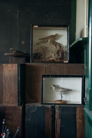 Stuffed Birds In Old Lab